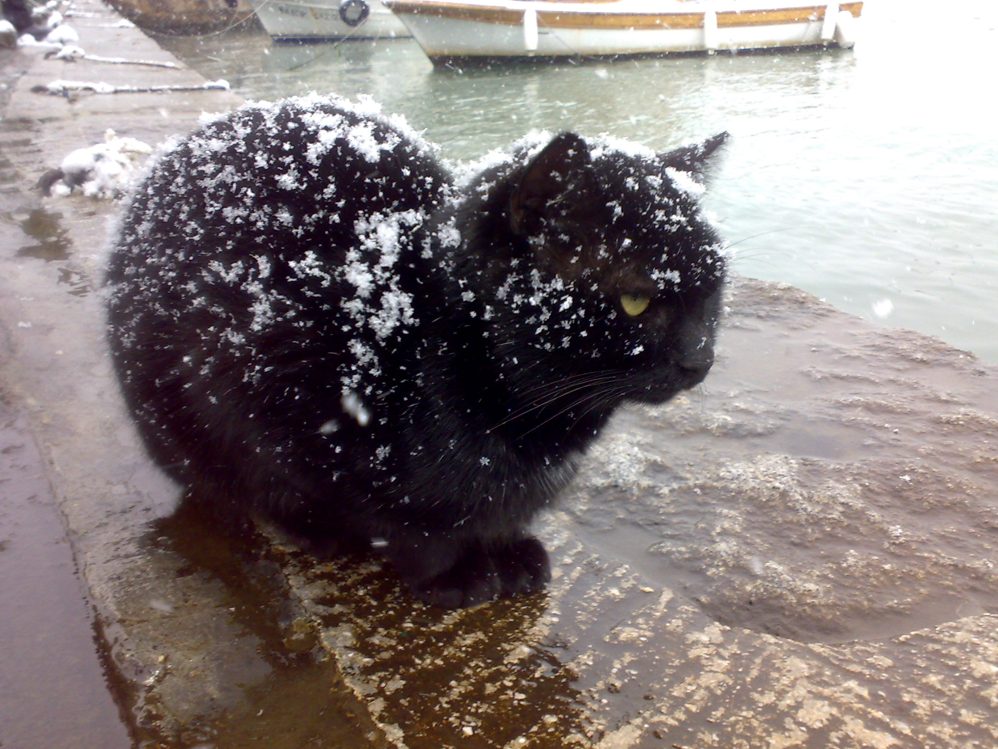 Black_cat_being_snowed_on-2016-05-8-17-47.jpg