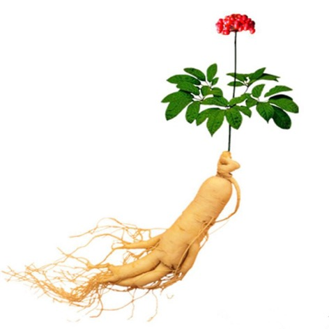 6-Chinese-Hardy-Panax-Ginseng-Seeds-King-of-Herbs-Traditional-Medicine-bonsai-Plant-Free-Shipping-2016-06-3-14-48.jpg